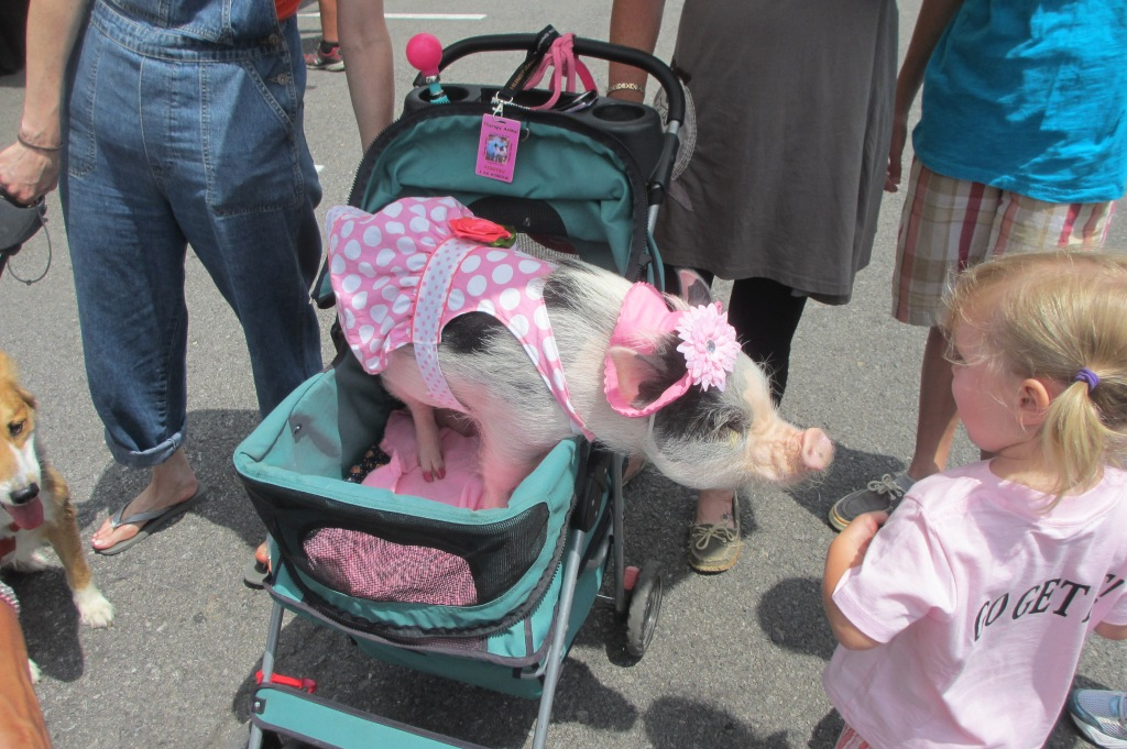 Pig in a dress in a stroller.  Your argument is invalid.
